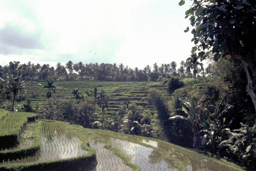 Reisterrassen währen der Rundfahrt