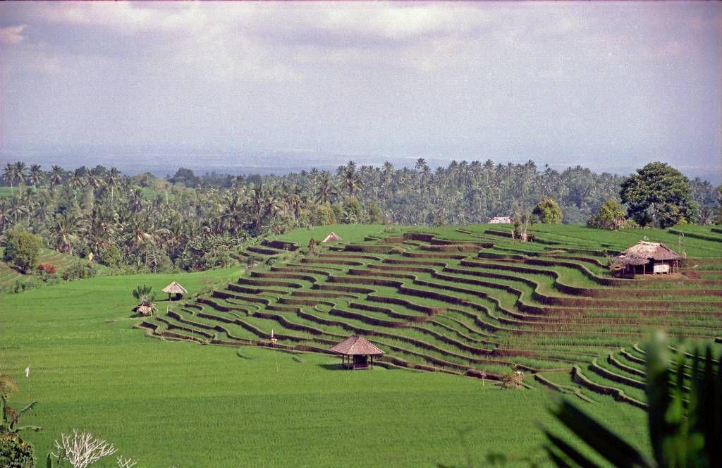 Bali, Resterrassen