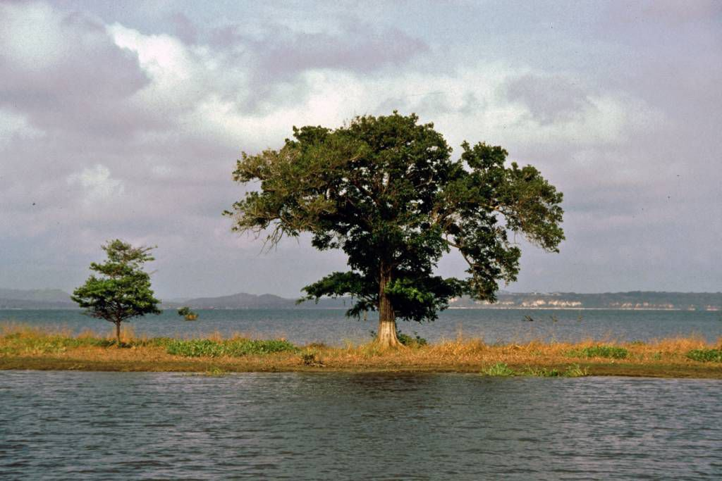 Amazonas während der Regenzeit nahe Santarém