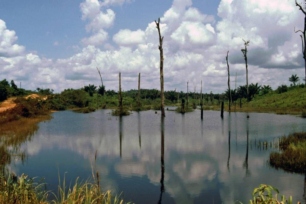 Abgeholzter Regenwald 90 Km südlich Santarém