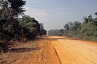 Piste im Regenwald 90 Km südlich Santarém