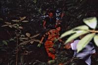 Im Regenwald 90 Km südlich Santarém
