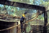 Iguazú Tierpark, Tucan