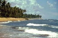 Praia do Forte, Strand