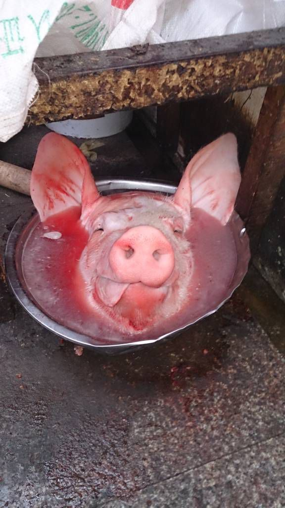 Shangri-La, Schweinskopf