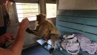 Zugfahrt, Affenbesuch