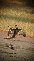 Bharatpur, Keoladeo-Nationalpark, Vogelschutzgebiet