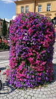 Bruneck, Blumengebinde