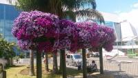 Cannes, Blumengebinde