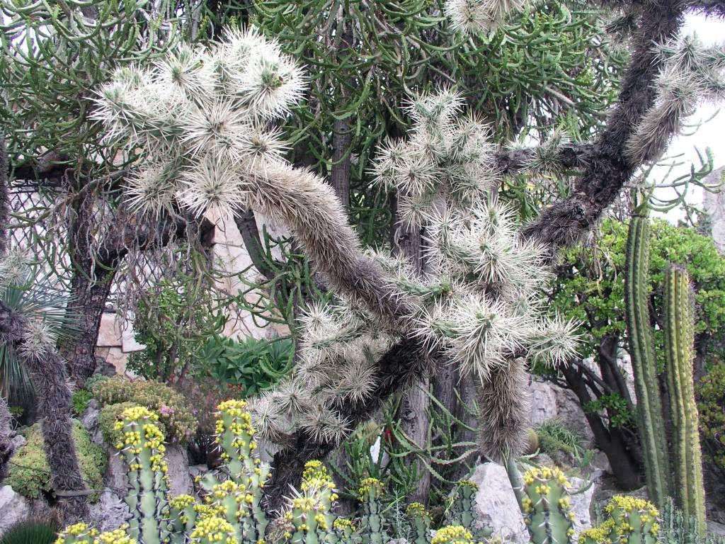 Monaco, Monte Carlo, im Botanischen Garten