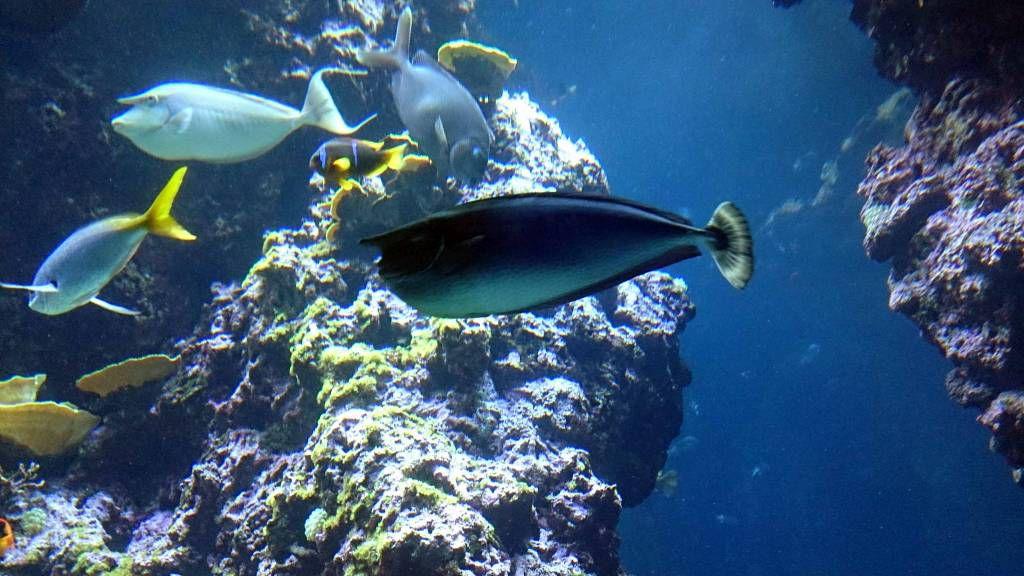 Monaco, Ozeanographisches Museum