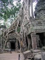 Siem Reap, Ta Phrom Tempel, Baumwurzeln