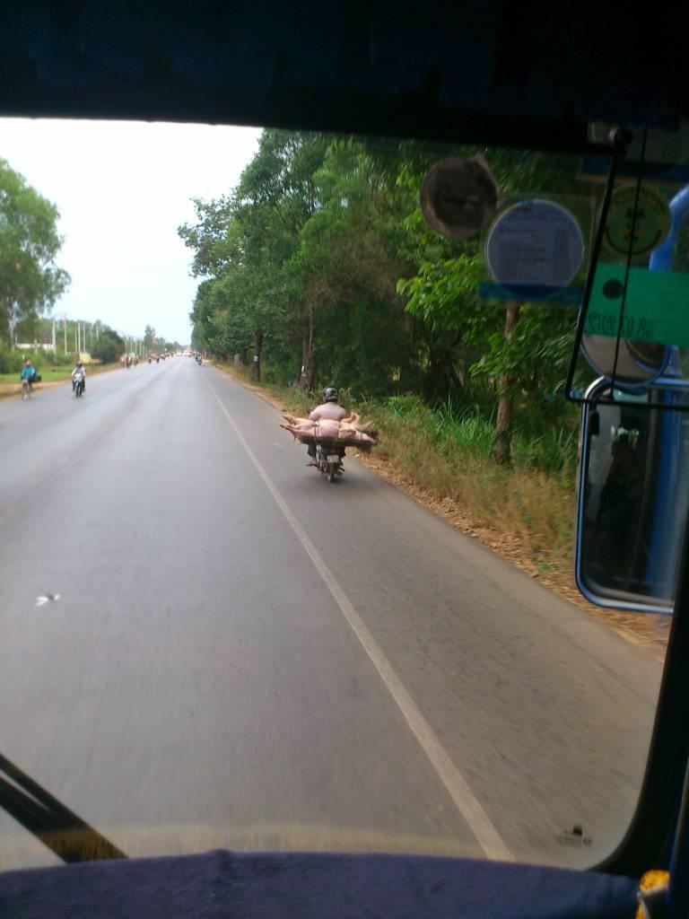 Siem Reap, Schweinetransport