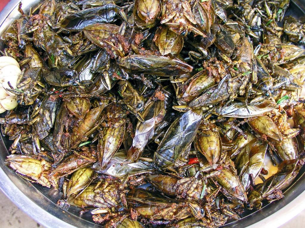 Kâmpóng Cham, Markt, frittierte Heuschreken