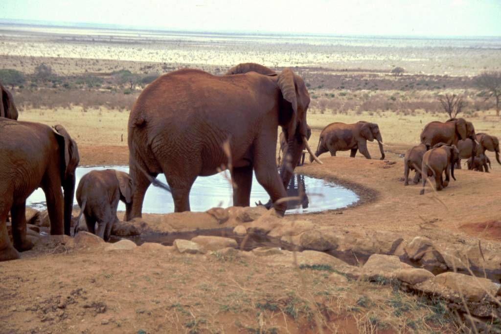 Voi Lodge, Elefanten