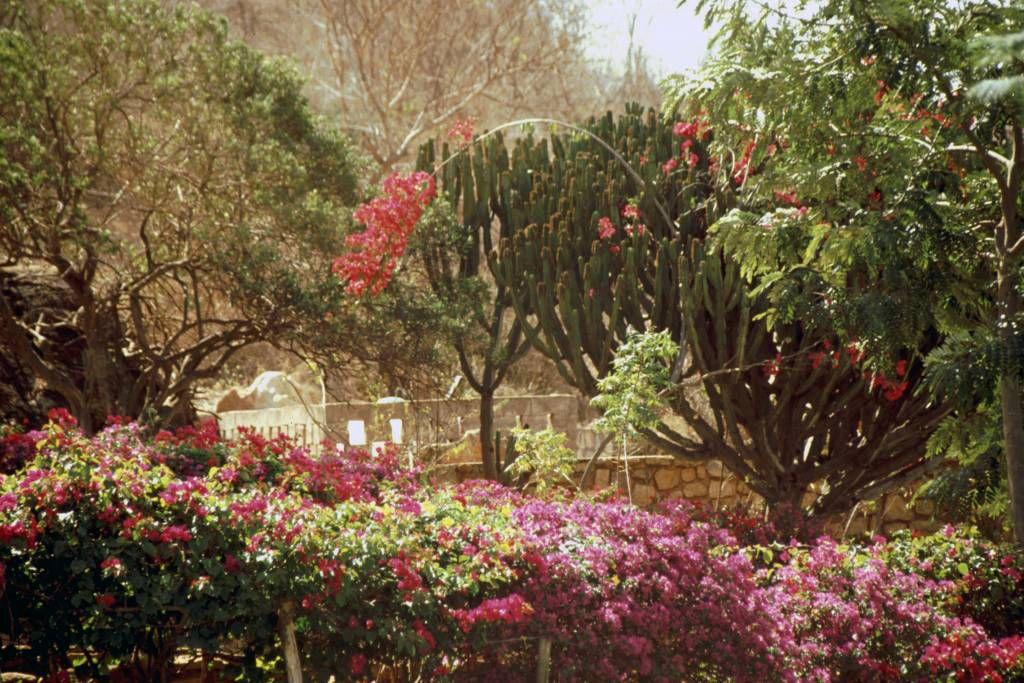 Voi Lodge, Gartenanlage