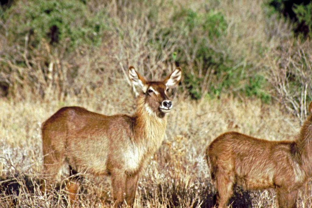Taita Hills Reservat