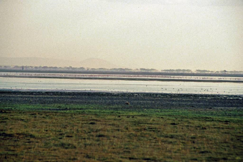 Amboseli Nationalpark, Flamingos
