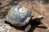 Mombasa, Nguuni Nature Sanctuary, Schildkröte