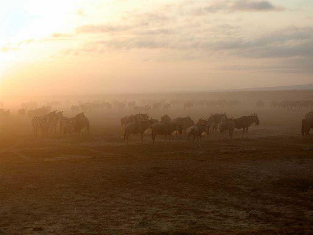Frühmorgens im Amboseli
