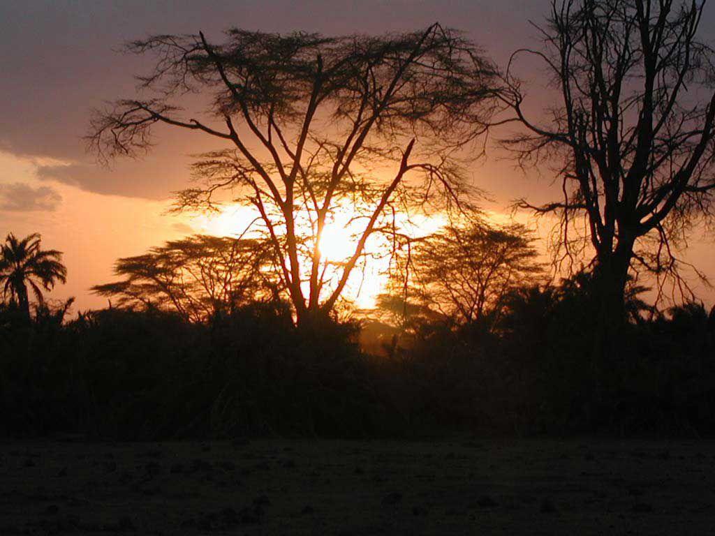 Abends im Amboseli