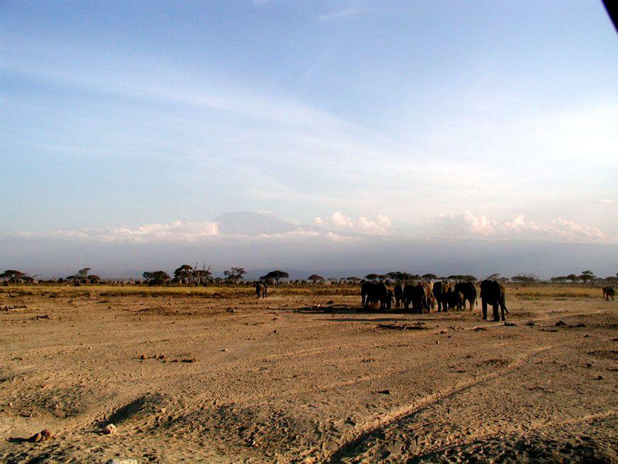 Elefanten auf dem Weg ins Nachtquatier
