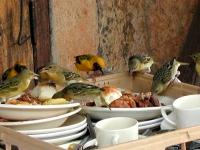 Resteverwertung in der Oltukai Lodge