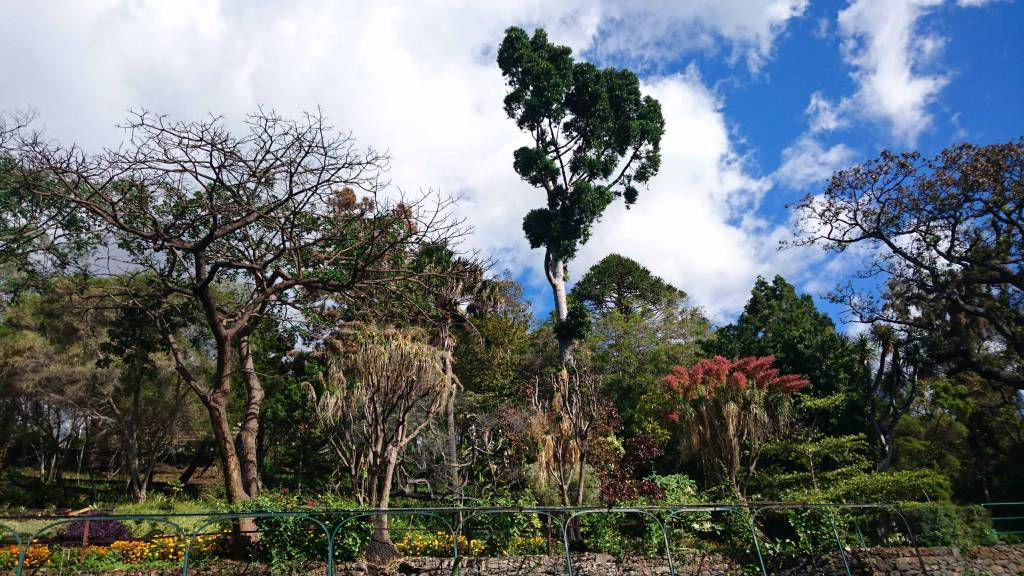 Madeira, Funchal, im Botanischen Garten