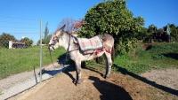 Málaga, auf dem Land, Esel