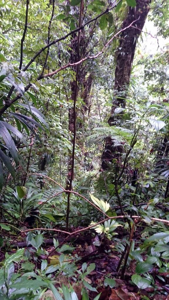 Dominica, Laudat, Regenwald