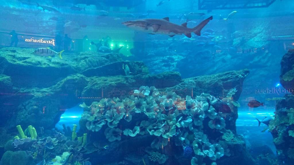 Dubai Mall, das größte Aquarium der Welt