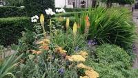 Glasgow, Pflanzen auf dem George Square