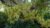 Singapur, im Orchideengarten