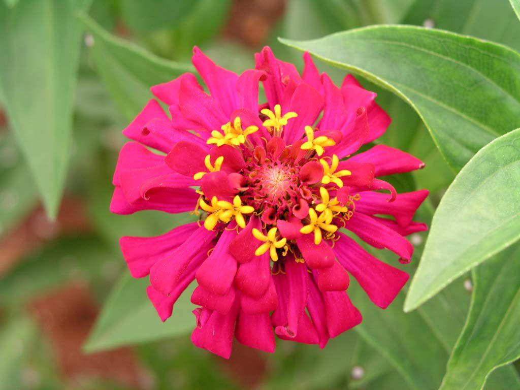 Pflanze, gesehen südlich von Havanna