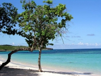 Baum am Strand des Hotels Las Brisas Guardalavaca