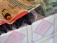 Ban Nateuy, lecker Ratten am Straßenrand