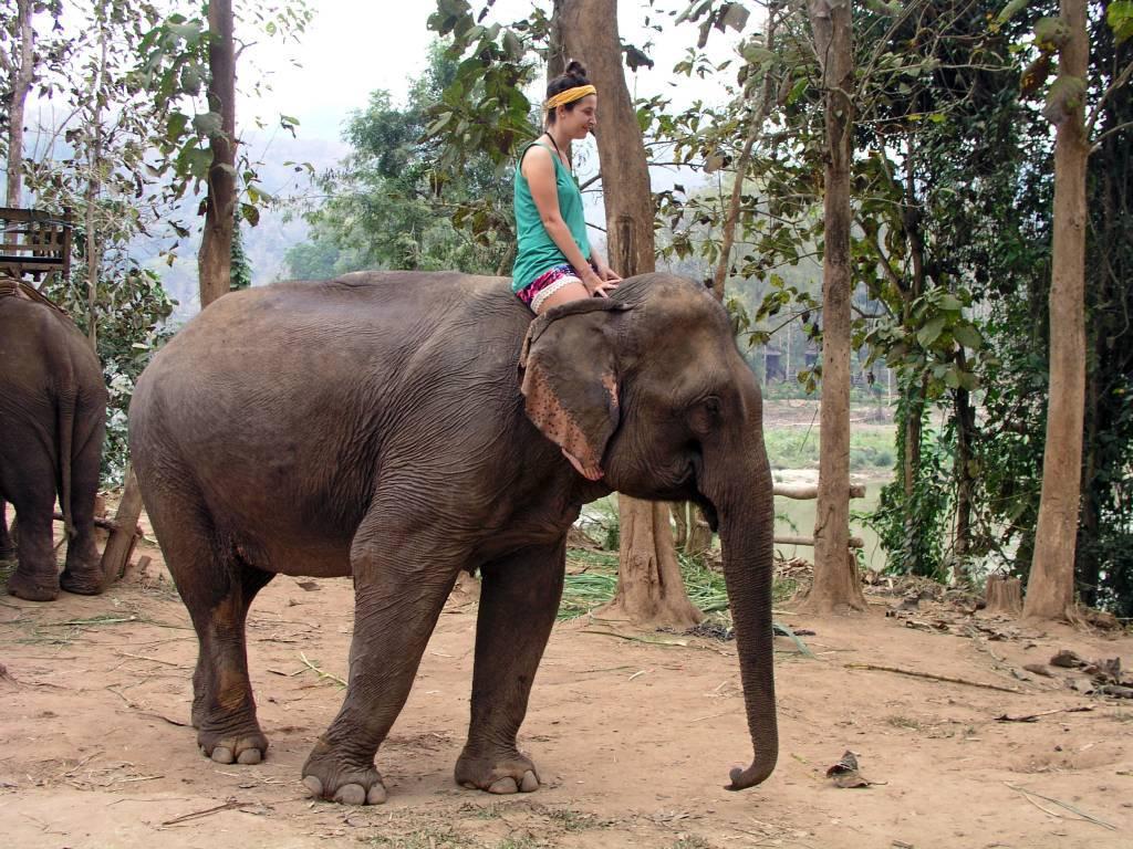 Ban Phôk-Noy, Elefantenritt