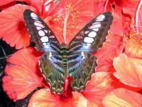Im Schmetterlingspark von Kuala Lumpur
