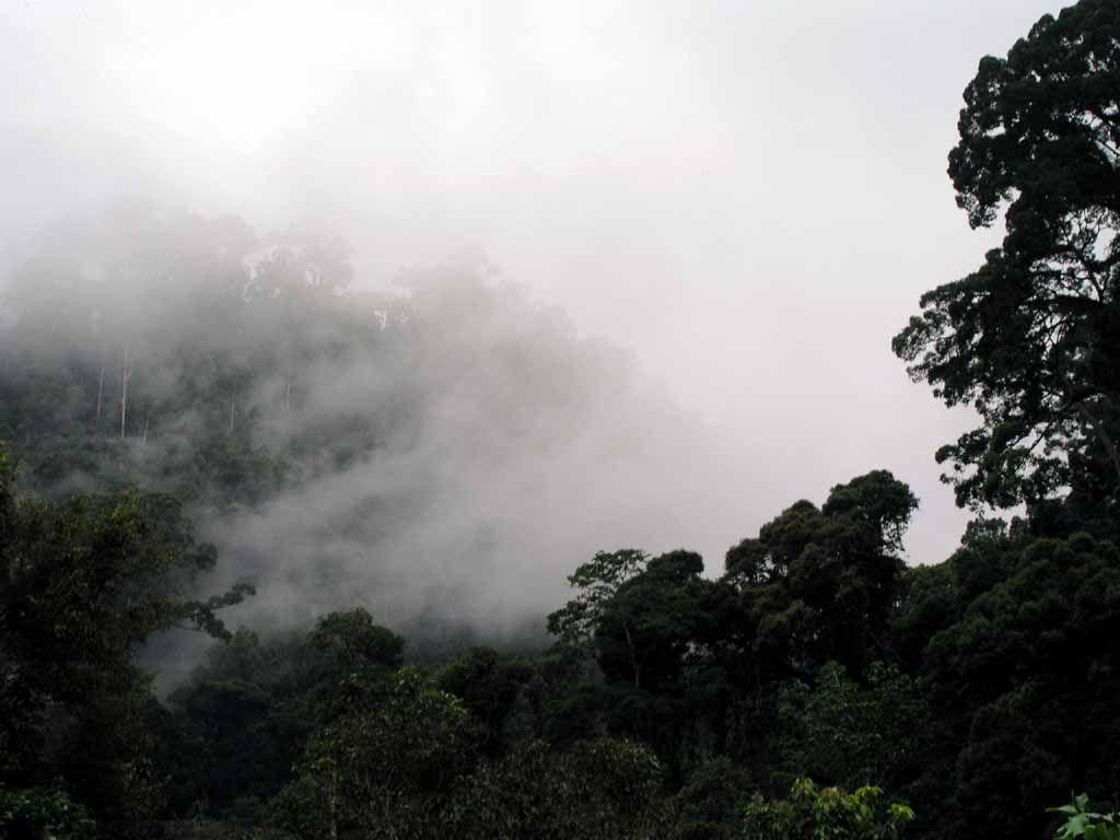 Regenwald bei Poring