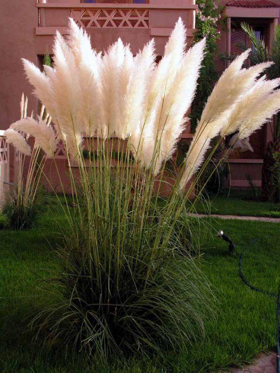 Pflanze im Hotel Le Fint, Quarzazate