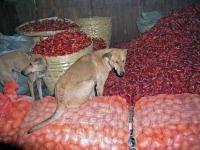 Nayaung U, Hund auf dem Markt