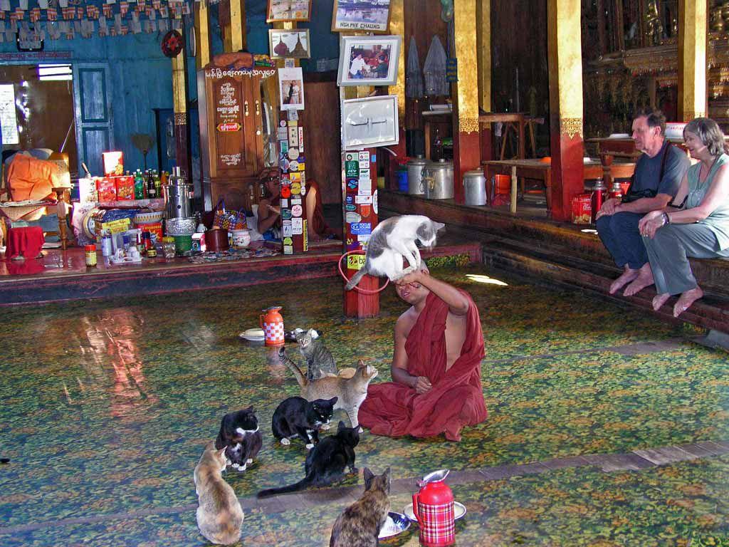 Springende Katze im Kloster der springenden Katze, dem Nga Phe Chaung