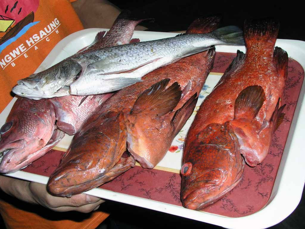 Ngwe Saung, Fischauswahl im Restaurant Wine Wine Lae