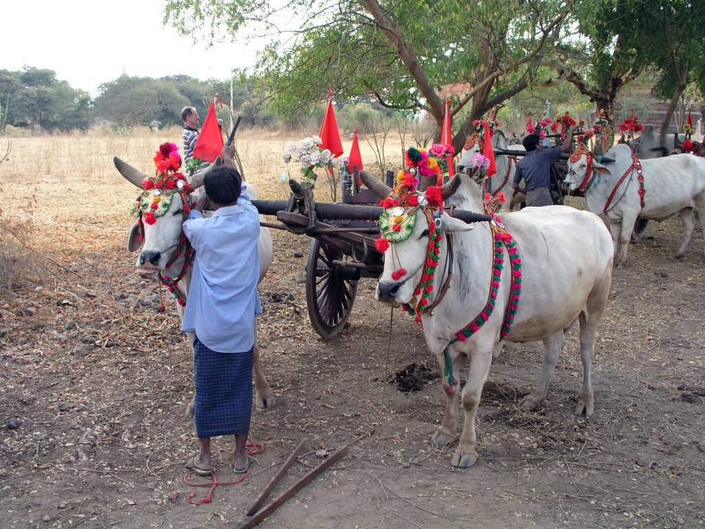 Nyaung U, Bagan, Ochsenkarren für Touristen