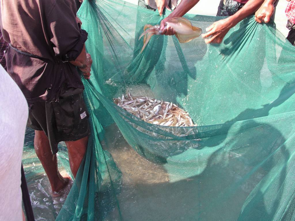 Ngwe Saung, Fischfang