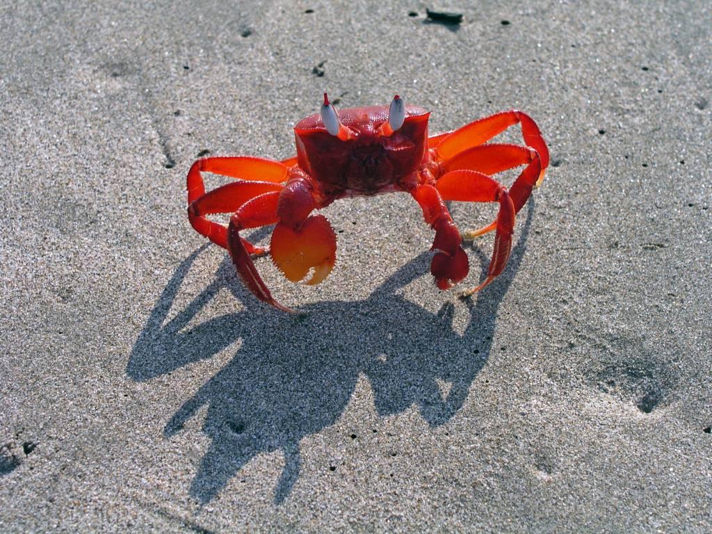 Ngwe Saung, Roter Krebs am Strand