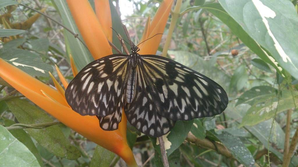 Yanaya, Butterflies Conversation Center