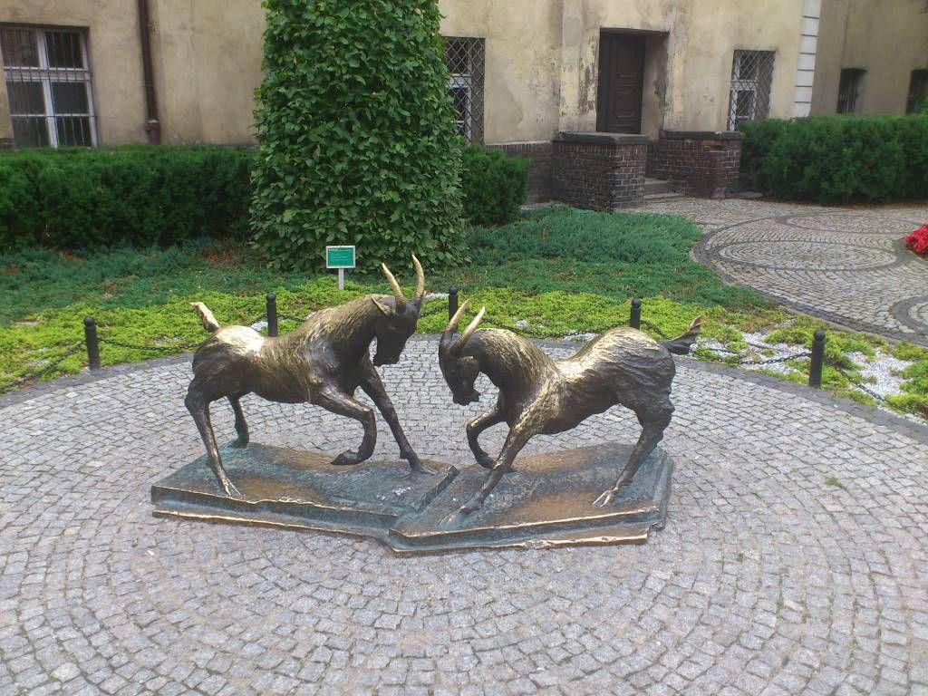Posen, Poznań, Standbild der Ziegenböcke