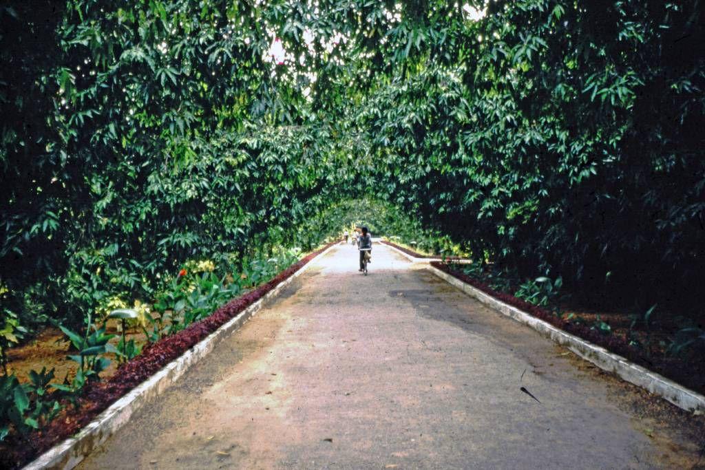 Beruwala, Hotel Swanee, Gartenanlage
