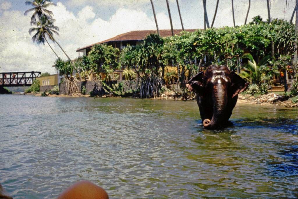 Bentota Fluss, Elefant